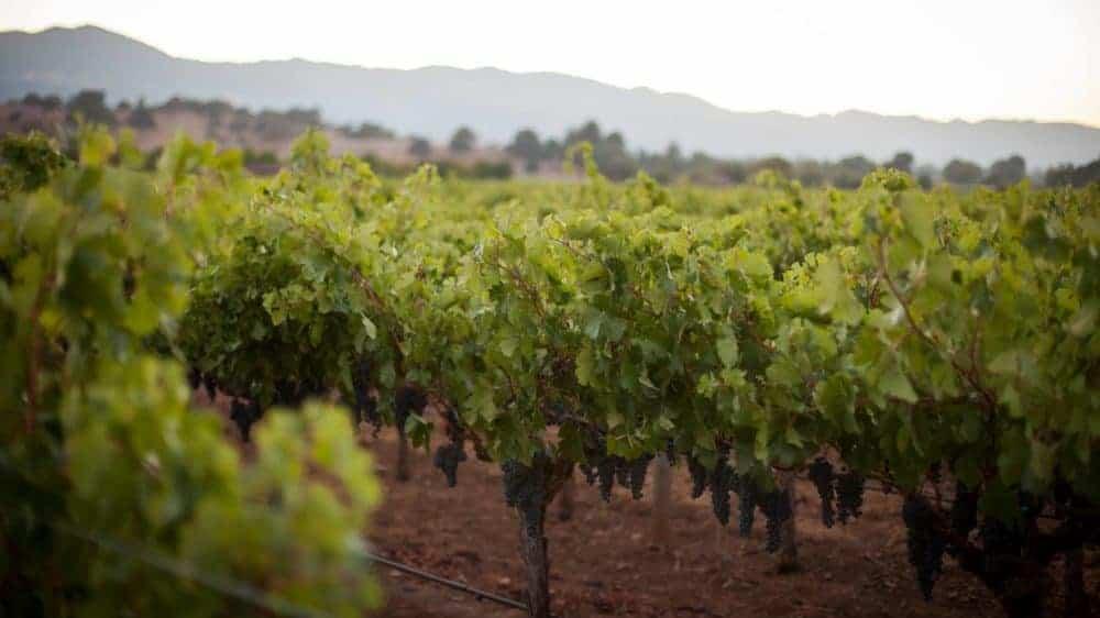 9620Beckstoffer Vineyards