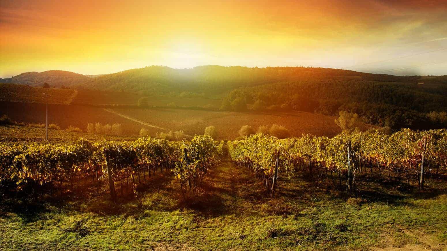 Napa Valley Boutique Wine Tours