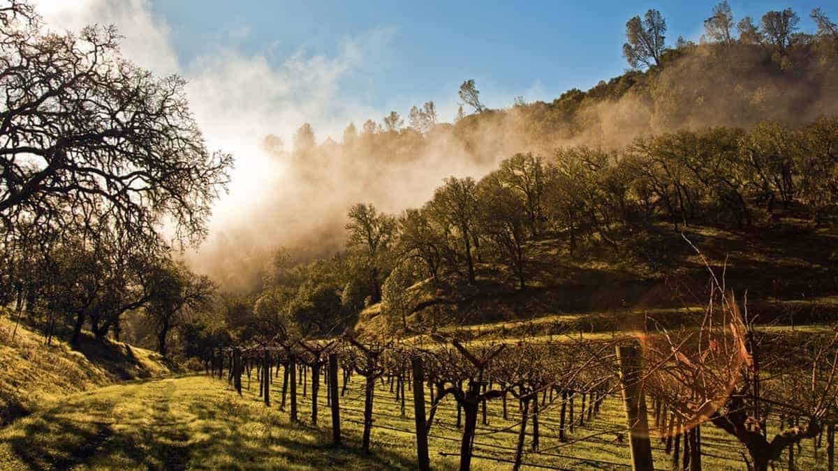 Brown Estate Vineyards