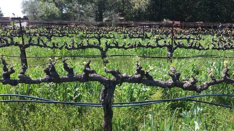 12213Stony Hill Vineyard