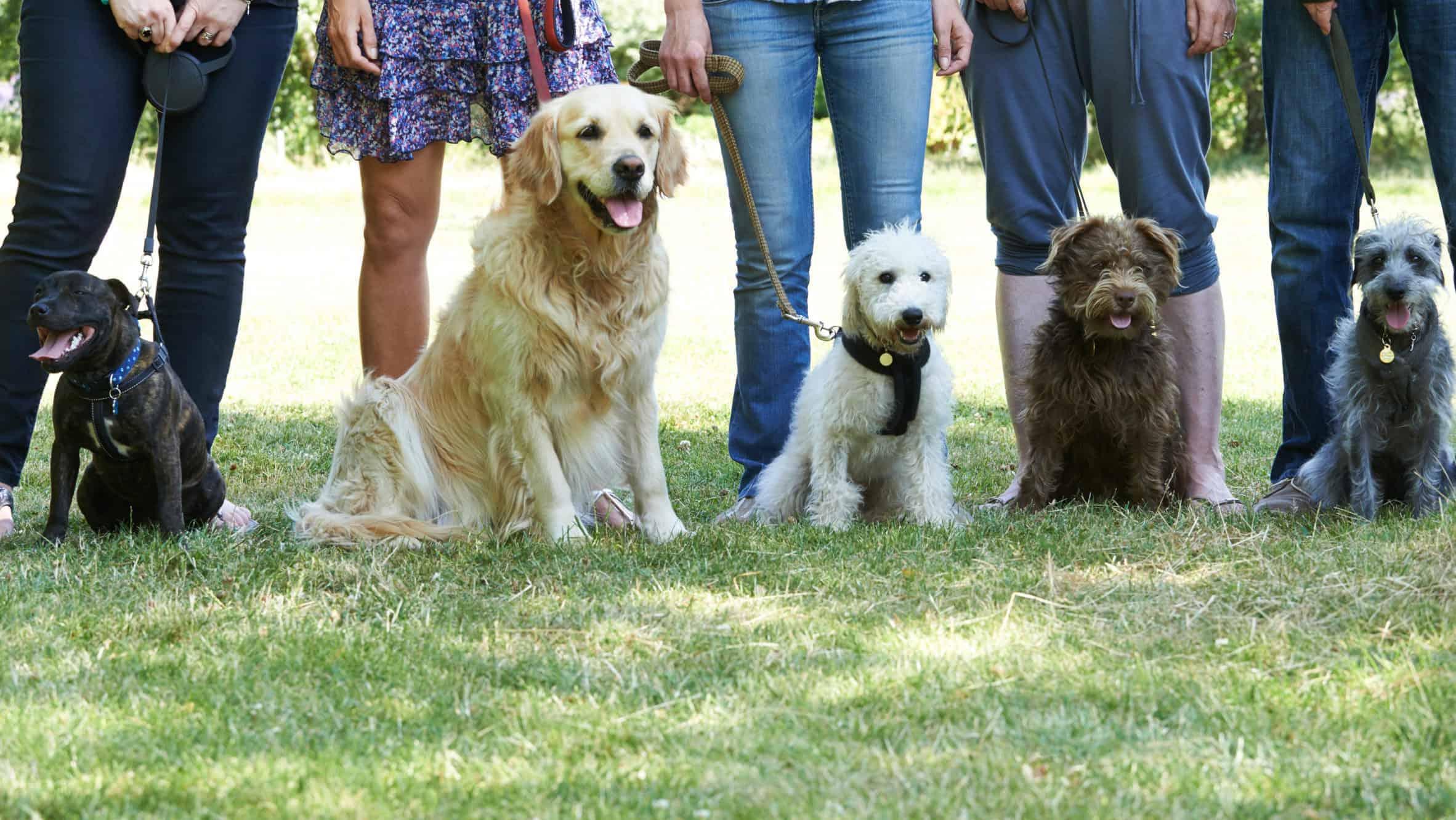 Dog Park at Wappo Park