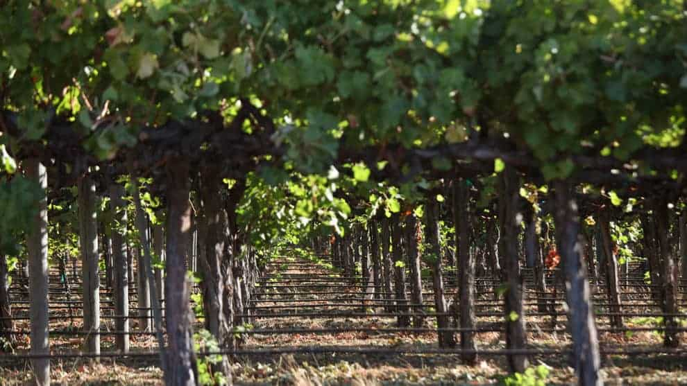 14450Beckstoffer Vineyards
