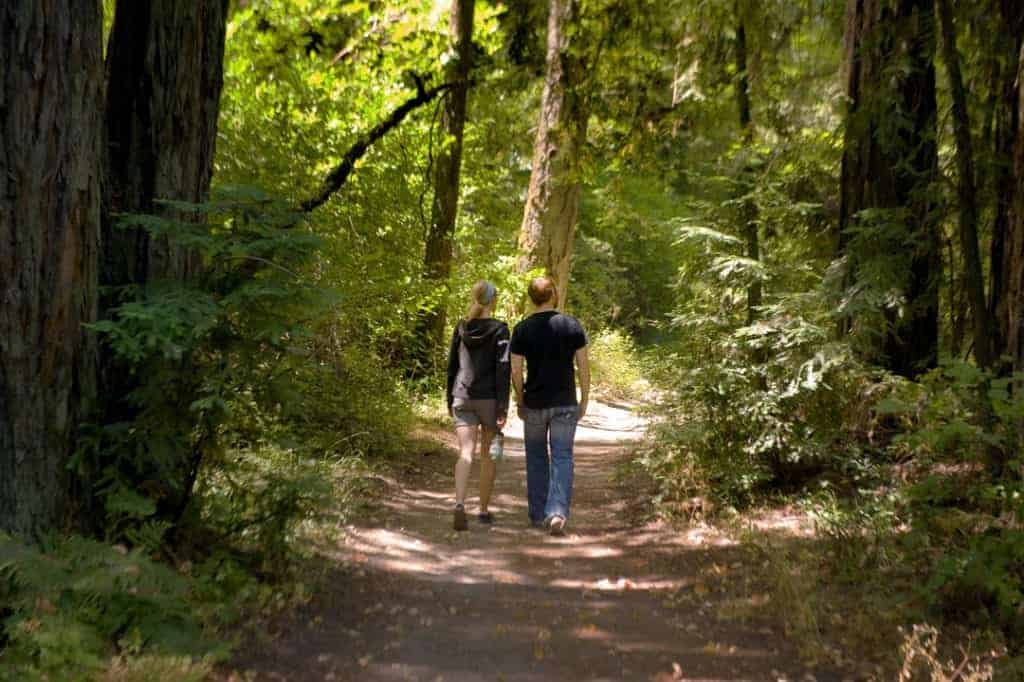 Bothe-Napa State Park redwoods