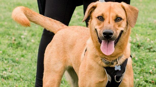WFA 2020 yello dog
