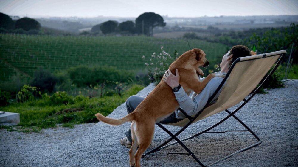 Pet-friendly Three-day Stay