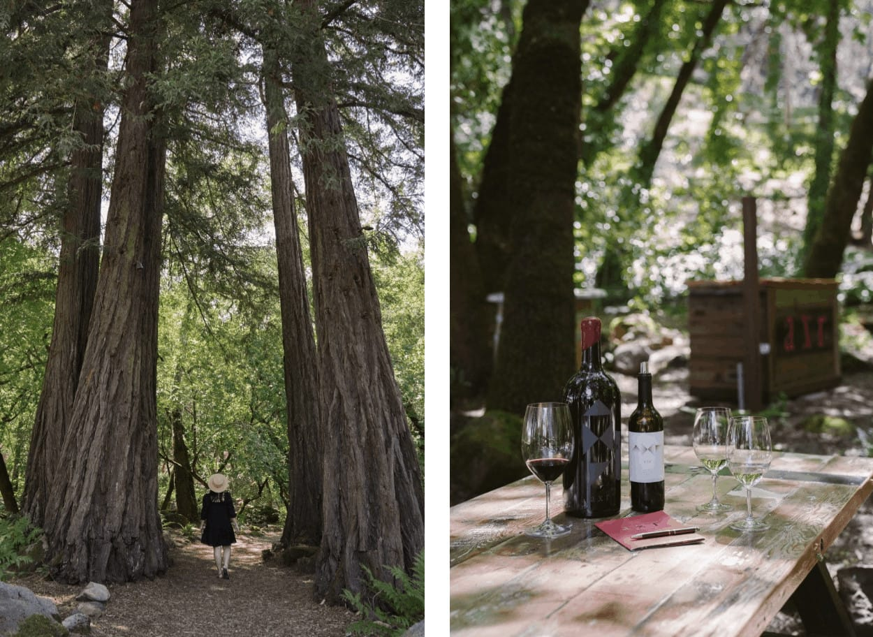wine and trees