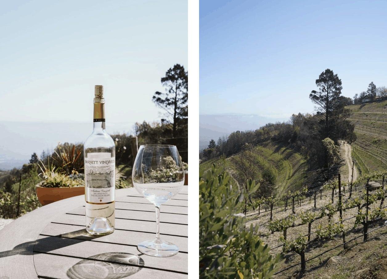 wine and vines