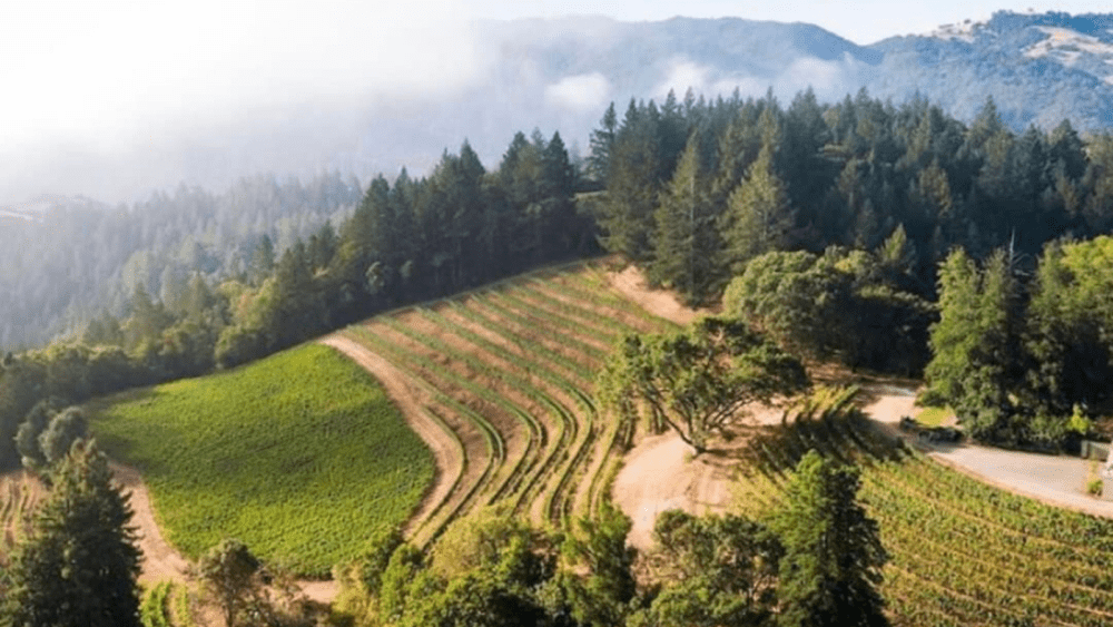 Discover Wine on Spring Mountain