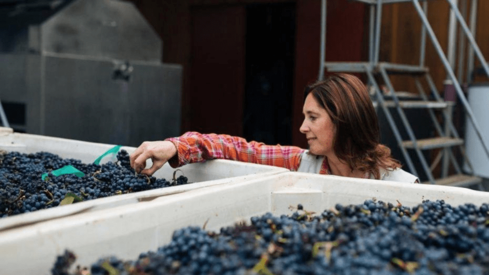 Stephanie Jacobs checking grapes
