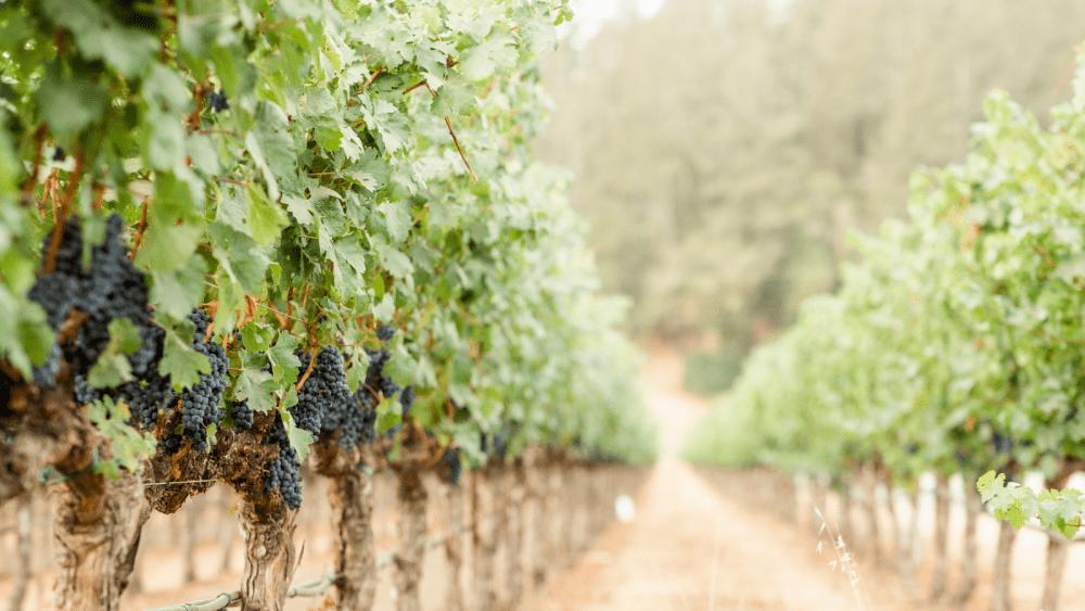 The Perfect Harvest & Crush Getaway